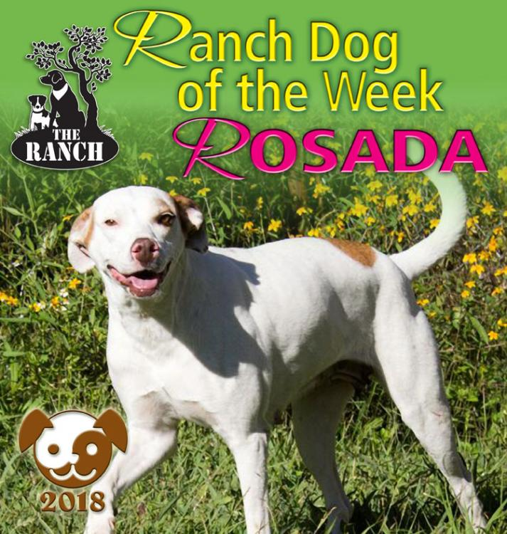 Ranch Dog of the Week – Rosada, A Happy, Sweet Girl! 5a4dcf93ae9d2_RDOW_ROSADA750.thumb.jpg.be7a33ad2b63ddd006dcc199e0210bf1