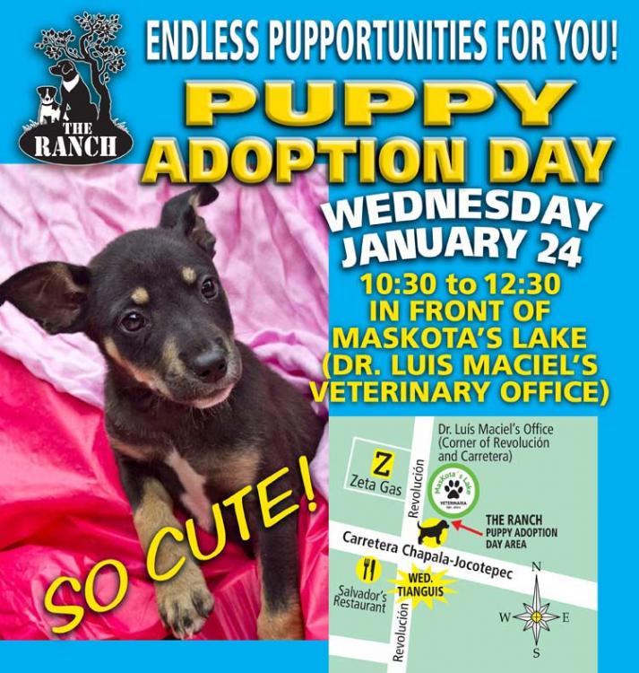 Ranch Puppy Adoption Day Wednesday 24 January 5a626f8969bac_ADPROMOWED-24Jan750.thumb.jpg.27aacde2ef2157915dd2a386657bb599