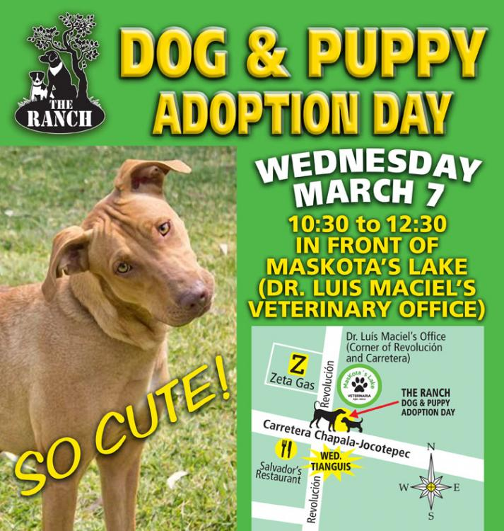 Ranch Puppy & Dog Adoption Day Wednesday 7 March 5a9e2e337948c_ADPROMOWED750-7mar.thumb.jpg.8353324ce2973117141aa2c58884c8c8