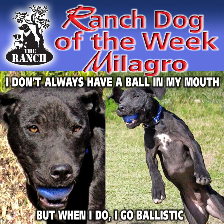 Ranch Dog of the Week – MR. MILAGRO 5abc803fe73a2_RDOW_MILAGRO750.jpg.f7eeccf9a16ce2f11d9dc01765139547