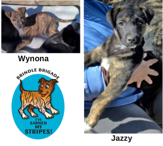 Ranch Dog Adoption Day this Saturday - 21 April WynJazzy.png.0ed56cee73375daf14f744a1a652aa2d