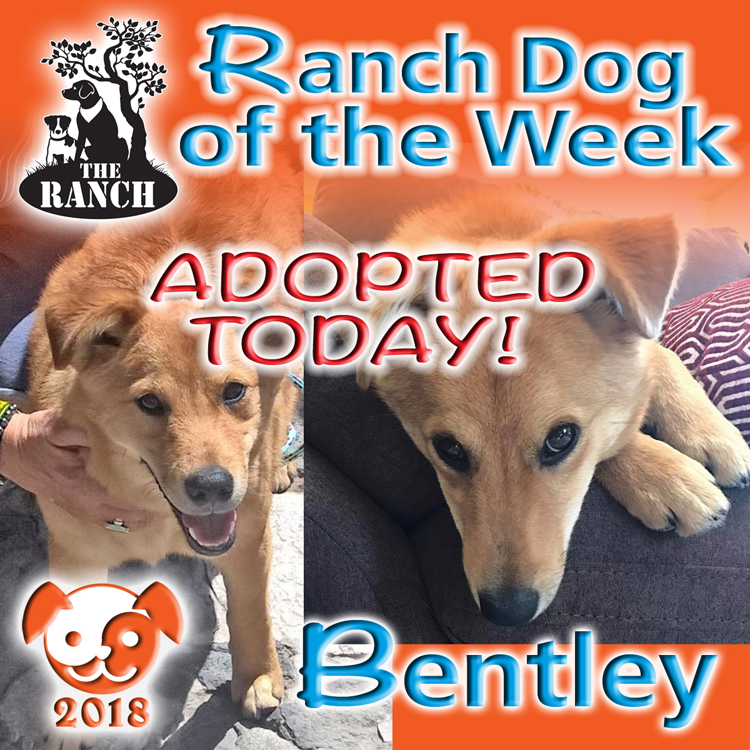 Ranch Pup of the Week – Our dear Bentley 5acd4b07dff3a_RDOW_BENTLEYFB750.jpg.6c5959ed5f8af10db80084e734d878bd