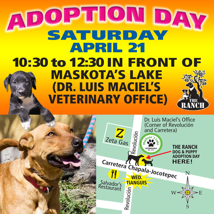 Ranch Dog Adoption Day this Saturday - 21 April 5ad7ac28e9a8d_ADPROMOSATFB750-21apr.jpg.9dde81aa36996c43157fbb6e71ca6a5e