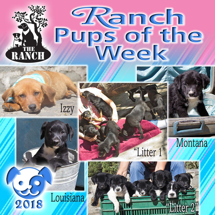 Ranch Pups of the Week – PUP-PORTUNITIES FOR YOU! 5ae012d5e8474_RDOW_PUPS750.jpg.41a2ffadad2c5ceb2f834407d65bc85f
