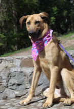 Ranch Puppy & Dog Adoption Day this Saturday - 21 July Furghee.png.dc2822c04811a8b208dfe097177b2e95