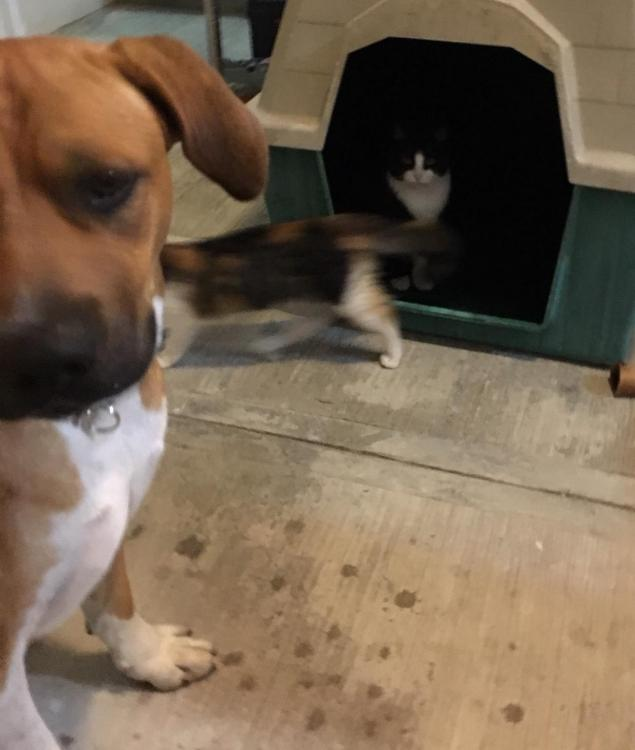 cats in doghouse2.jpg