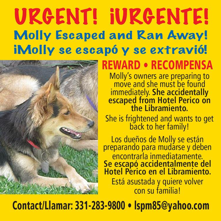 Lost Dog 558557011_MOLLY750.jpg.c8a25827712d1f2f260cbdafd28b117f