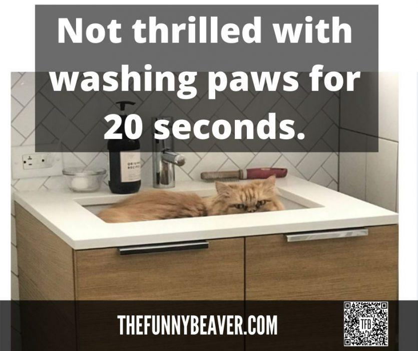 not-thrilled-with-20-sec-paw-wash.jpg