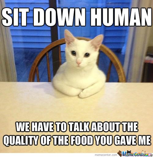 how-my-cat-shows-she-amp-039-s-hungry_o_2395983.jpg