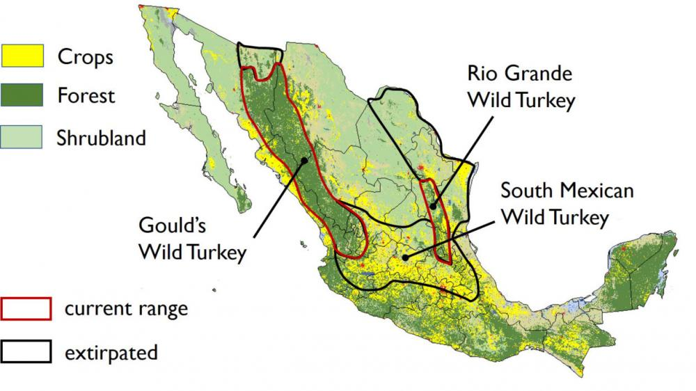 mexican turkey map.jpg