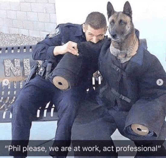 dog-meme-of-a-dog-wearing-a-police-uniform-and-a-cop-next-to-him-is-biting-his-arm.png.0d39bc4aa91da223b55f358be7e5bf84.png