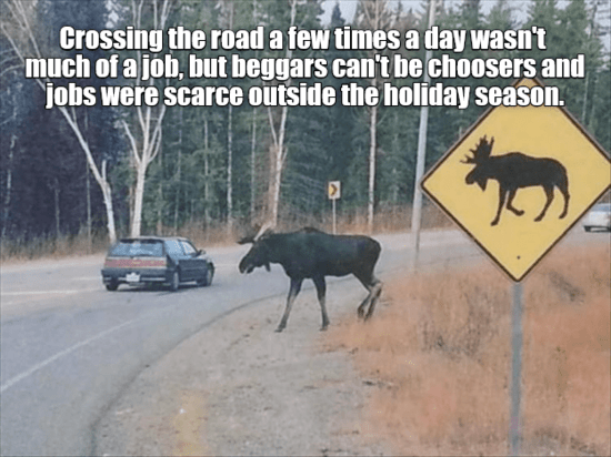 moose.png.a922bb26d94093989bfd8384bff06617.png