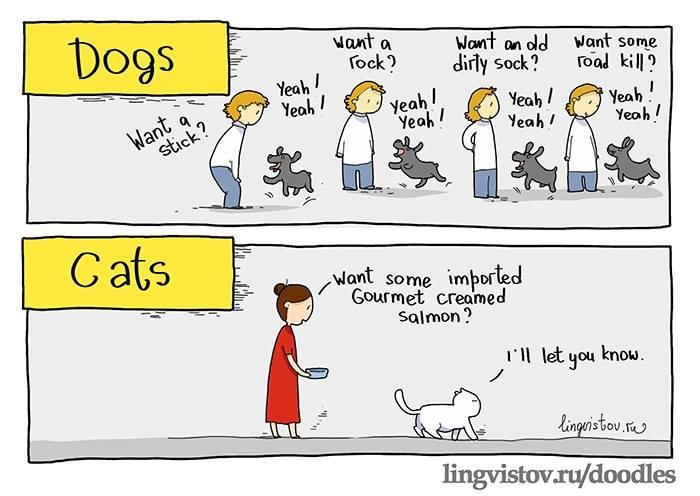 dogs and cats.jpg